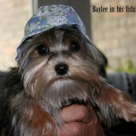 Baylee-01