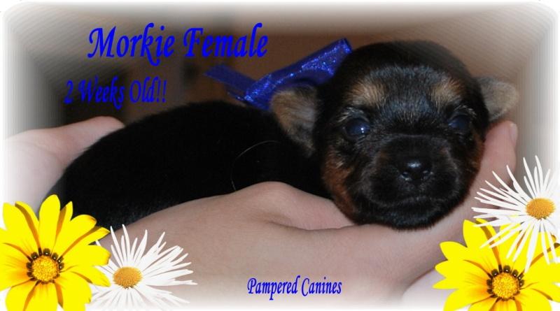 05-23-10-Annabelle-Female-2wks.jpg