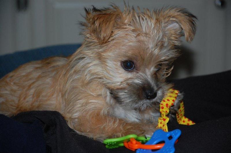 11-11-11-Annabelle-Female-13wksB.jpg