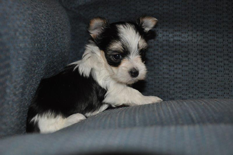 2018-07-Patches-Female-5wks.jpg